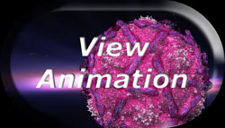 Click Here To View Animations